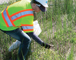 Photo thumbnail of a Caltrans worker picking up litter.